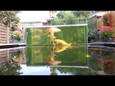 Tuincentrum het oosten is groot in vis en vijverproducten for Intratuin wijchen