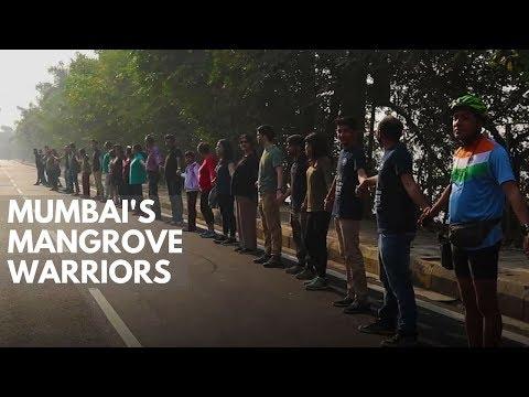 Mumbai's Mangrove Warriors: Citizens are working to reclaim lost mangroves