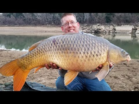 Carp Fishing In Spain - Catching Carp On The Ebro River - Guided Carp Fishing Trip