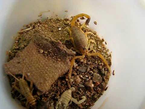 how to make scorpion habitat
