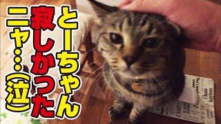 毎日一緒の猫さんと3日振りに再会してみた結果…