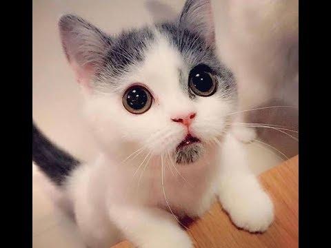 Очаровательно милые котята кошки кошечки