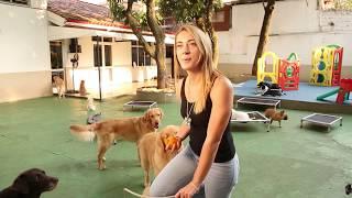 Curso de Recreação e Comportamento de Cães em Grupo