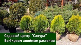 Выбираем хвойные растения / Садовый центр Сакура / Рыбки в пруду/