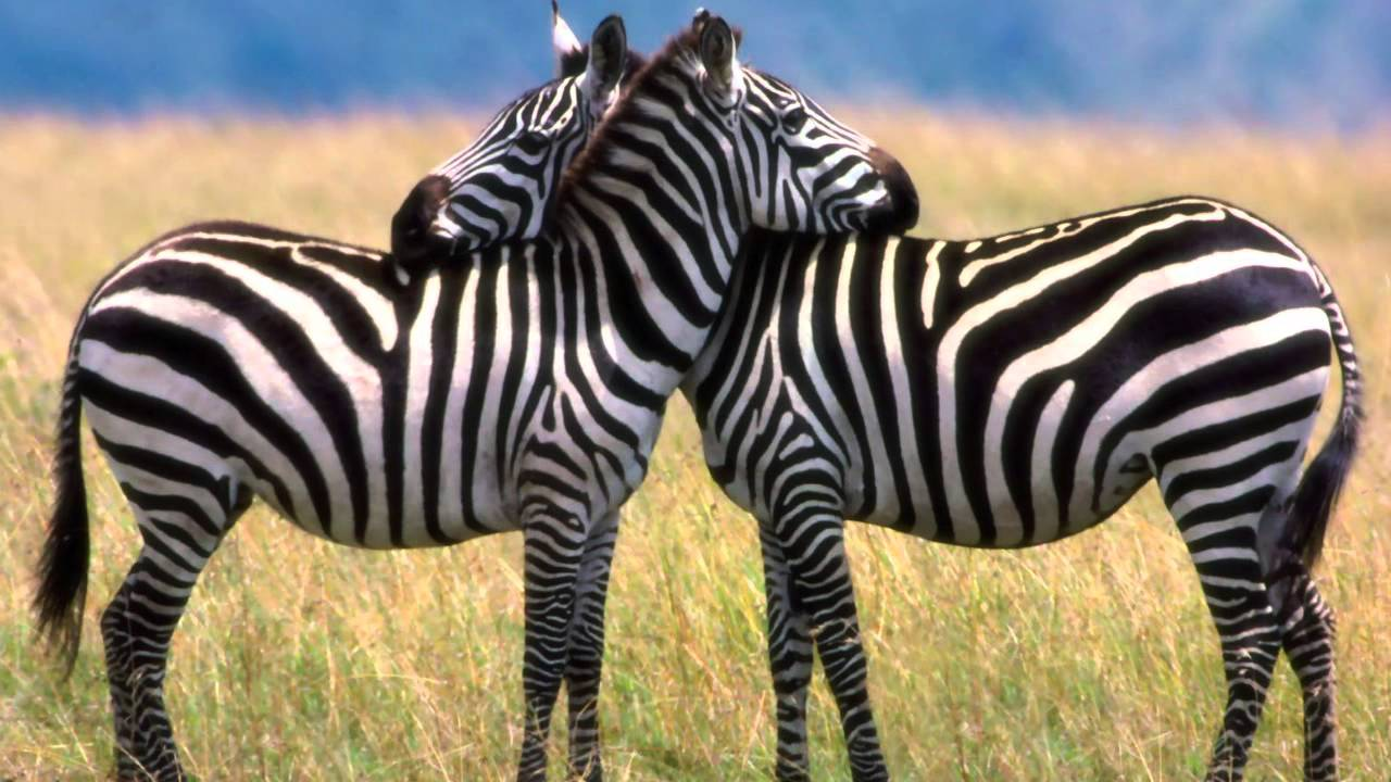 dyr i zoologisk have