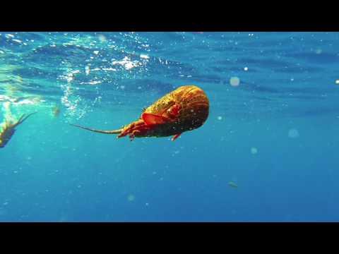 Buceo en Isla Robinson Crusoe - Archipiélago Juan Fernández