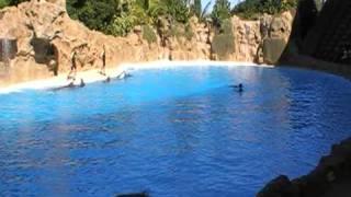 Дельфин Шоу в Тенерифе