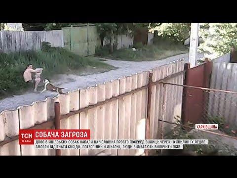 На Харківщині бійцівські