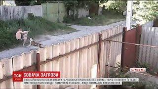 На Харківщині бійцівські пси ледь не вбили людину
