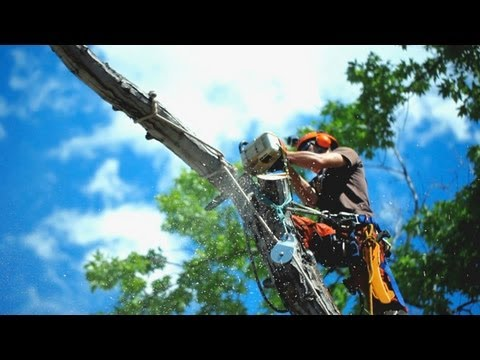 Tree Stump Removal Eastern Suburbs Sydney Call (02)8103 3070 Now
