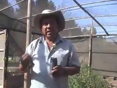 En el vivero de plantas nativas facultad de agronom a for Vivero agronomia