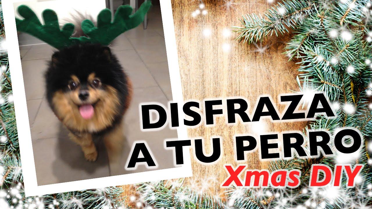 Como Hacer Un Disfraz Para Perro Navidad Diy Youtube - Como-hacer-disfraces-de-navidad