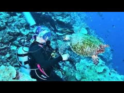 Brave sea turtle shows up to visit scuba divers at shark dive