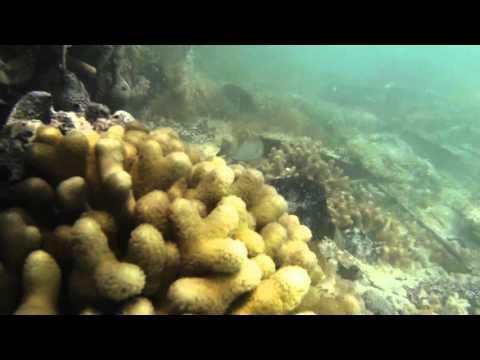 Plane Crash Iguanas   Turks and Caicos Islands (Part 5)