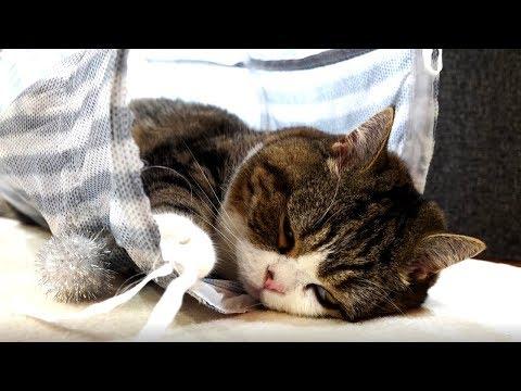 おねむなまる。-Sleepy Maru.-