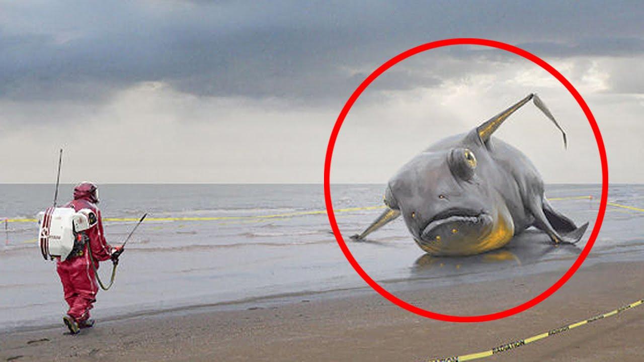 25 Bizarre Animal Photos Explained - YouTube