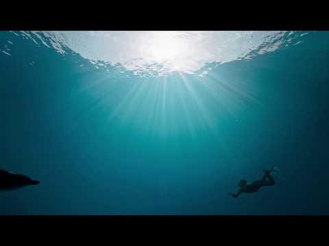 25% OFF Mastercard At Atlantis Aquaventure Dolphin Bay