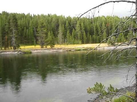 Wolf Pack Kills Elk in Yellowstone N.P.