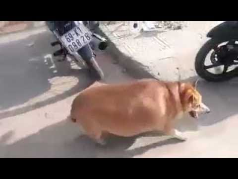 Animals Are Funny Sometimes - Fat Pets