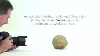 The National Geographic Photo Ark at Annenberg Space for Photography