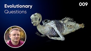 Could Mermaids Evolve? Evolutionary Question # 9