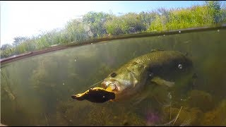 SUPER Clear Water Fishing with Topwater Duck Lure