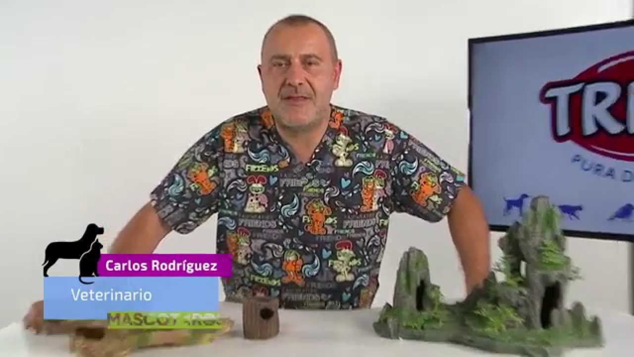Cómo usar la decoración en los acuarios - Mascoteros