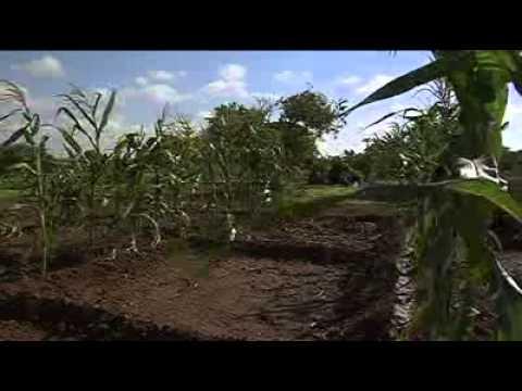 EU/FAO SOMALIA