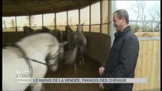 MIDI EN FRANCE mai 2013  Haras de la Vendée - Patrick Jullien