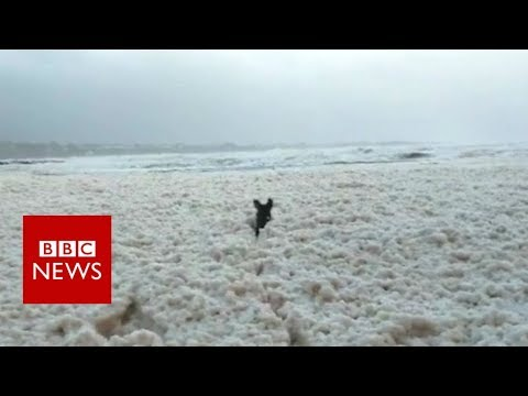Dog enjoys beach covered in sea foam caused by Storm Eleanor - BBC News