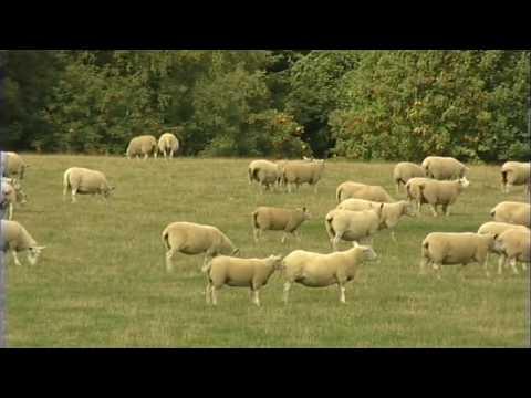 Animal Health, Sheep, Part 1