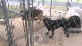 Dogs wait for command to eat