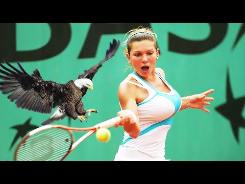 20 EPIC MOMENTS WITH ANIMALS IN SPORTS