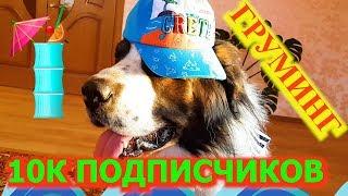 10К ПОДПИСЧИКОВ! Иду в собачий салон красоты. DogVlog / Говорящая московская сторожевая Булат