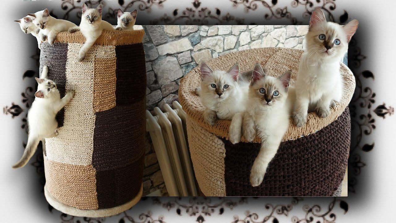 Diy 😻 kletter tonne für katzen scratching barrel condo
