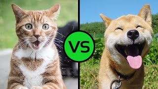 Война кота с собакой