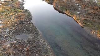 潮溜まりの中で泳ぐ秋のボラ群れは大きい thumbnail