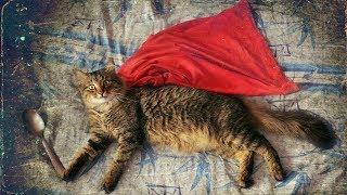 Удивительные истории о кошачьем героизме