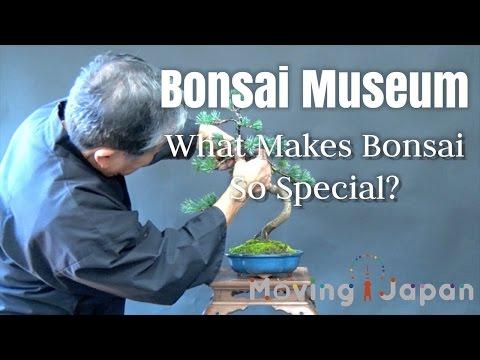 Bonsai Museum : What Makes Bonsai So Special? 【Moving Japan】