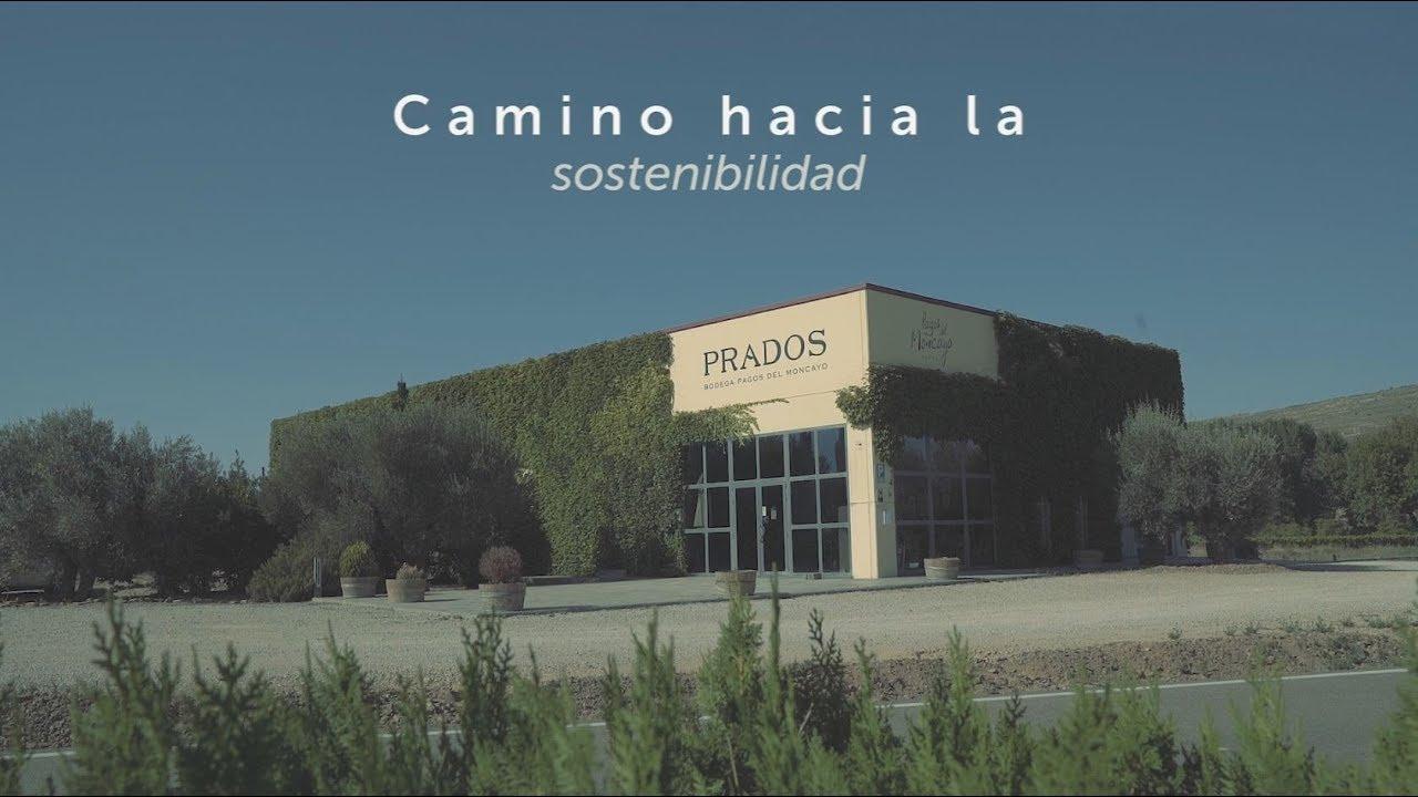 Vendimia de vinos sostenibles - Bodega Pagos del Moncayo