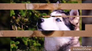 Собаки бывают разные