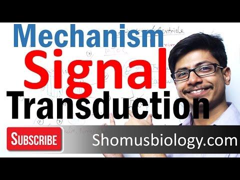 Signal transduction | cell communication pathway