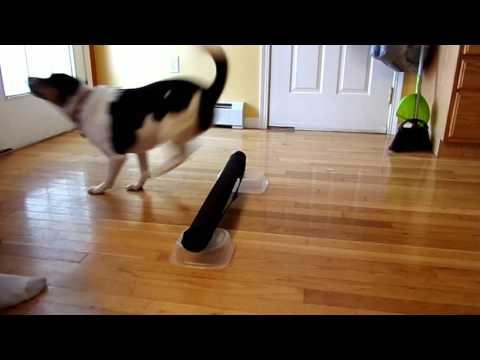Teaching Dog Hurtles