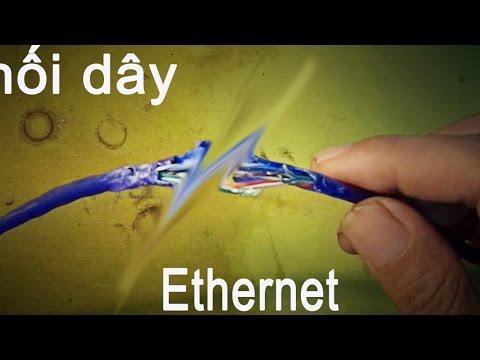mẹo vặt cuộc sống cách nối dây mạng bị chuột cắn,  Ethernet cable connector