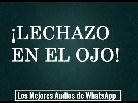 LECHAZO EN EL OJO Audios de WhatsApp: Los Mejores Audios de Whatsapp en la Web