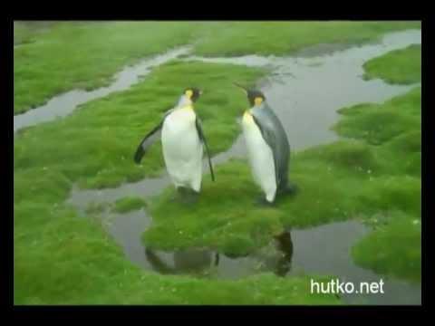 пингвины / смешные картинки и другие приколы: комиксы, гиф