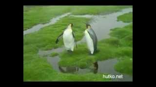 Приколы с пингвинами