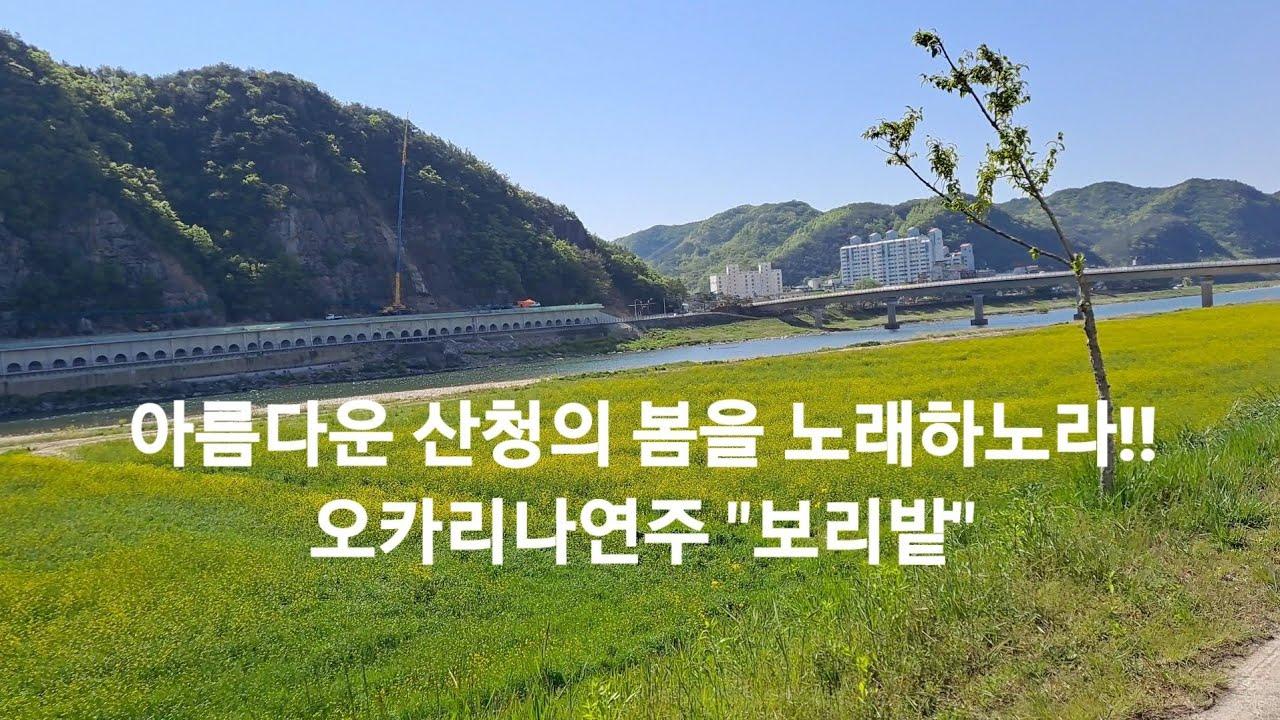 """아름다운 산청의 봄을 노래하노라!! 오카리나연주 """"보리밭"""""""