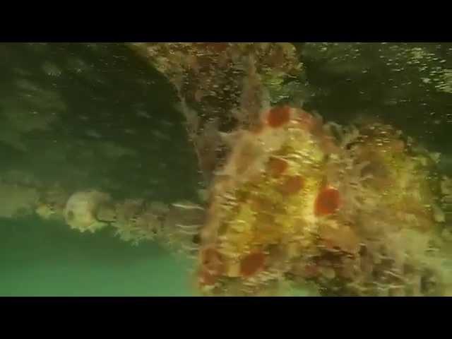 Sanctum 07/24/14 Hull Service Condition Video