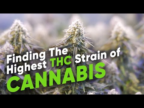 Finding The Highest THC strain of Cannabis Advanced Growing Ep. 1 | Advanced Nutrients